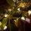 Gloria Warm White 50LED C7 Indoor/Outdoor Battery-Operated String Lights